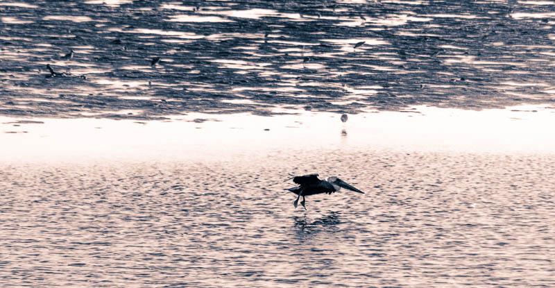 Pelican Landing – Bolsa Chica Wetlands, California