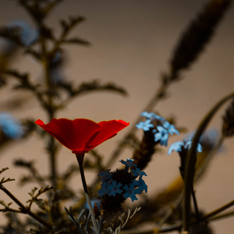 Somber Bouquet 3
