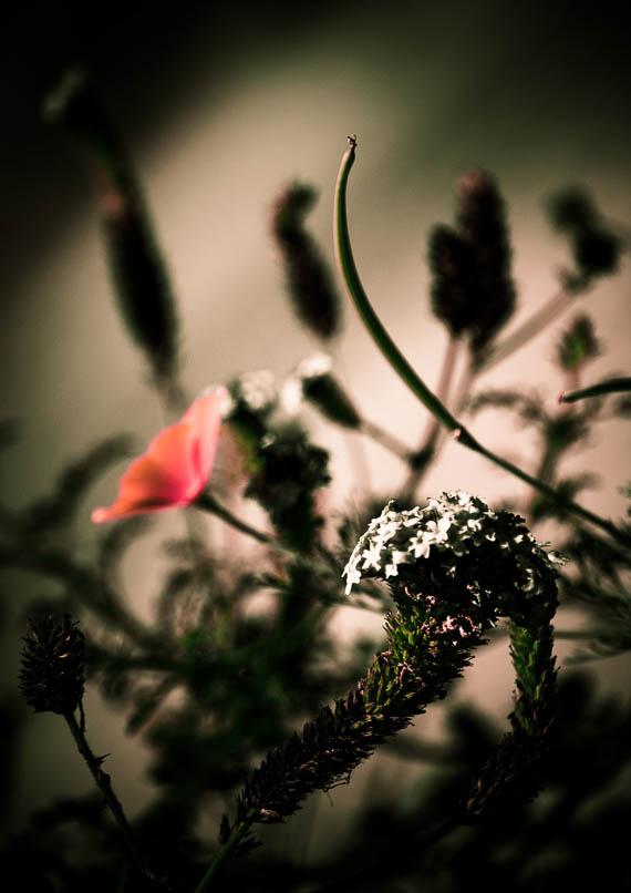 Somber Bouquet 1