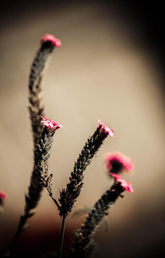 Somber Bouquet 2