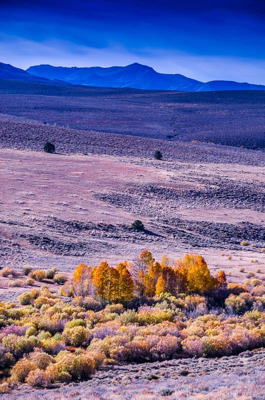 Autumn Oasis – The Sierra Nevadas, Mono County, California