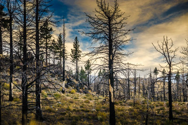 Aftermath – The Sierra Nevadas, California