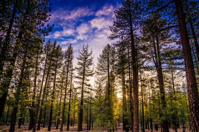 Sunset in the Forest – Mammoth Lakes, The Sierra Nevadas, California