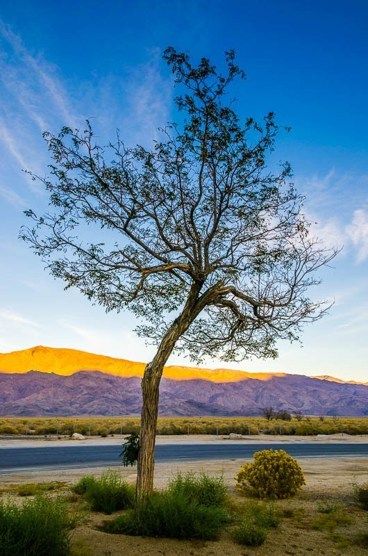 Happy Tree – The Sierra Nevadas, Coso Junction, California