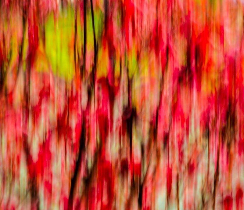 Autumn Impression 5