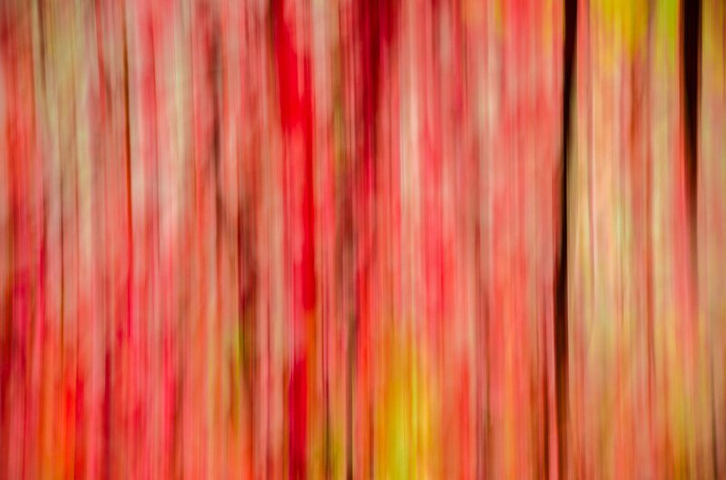 Autumn Impression 7