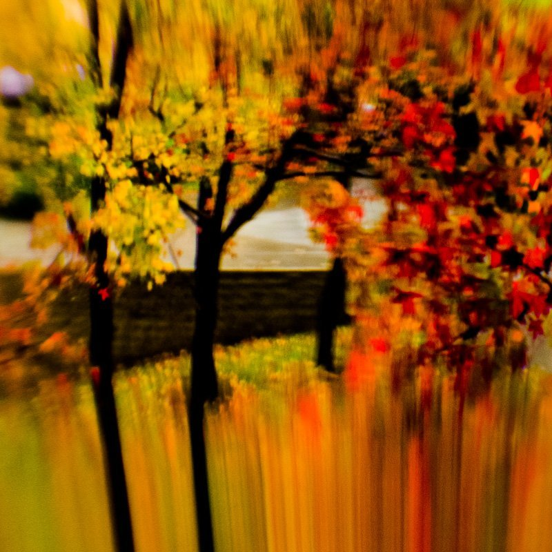 Colors Of Fall 3