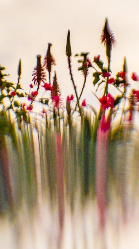 Floral Reverie 1