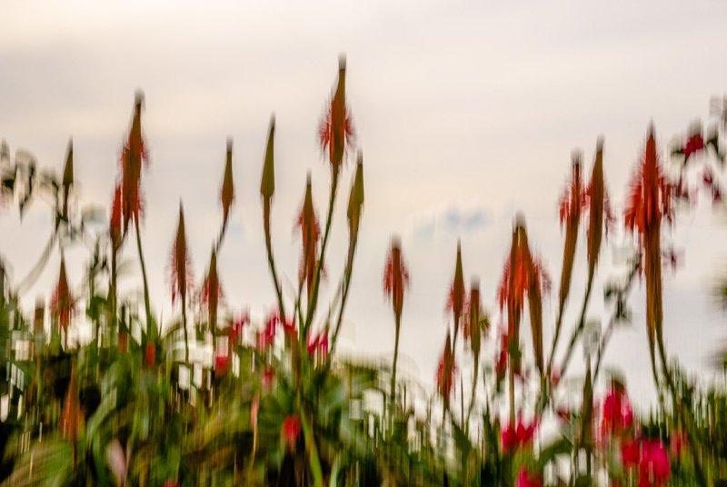 Floral Reverie 2