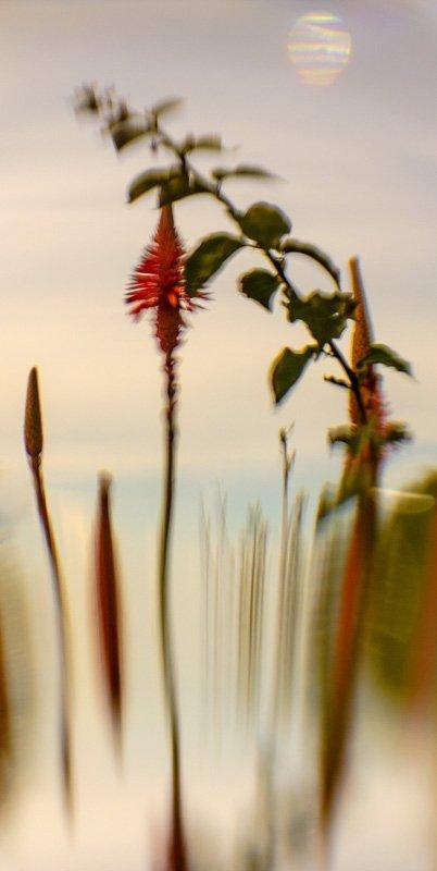 Floral Reverie 3