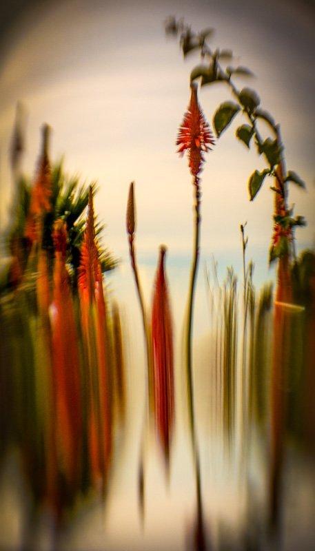 Floral Reverie 4