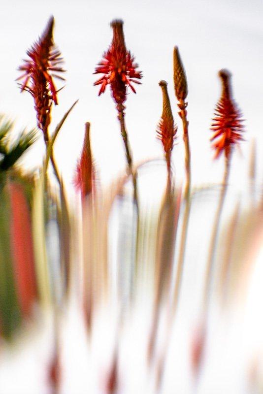 Floral Reverie 5