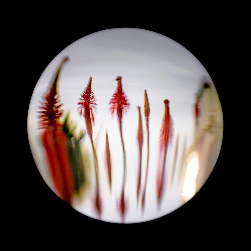 Floral Reverie 6 - Porthole