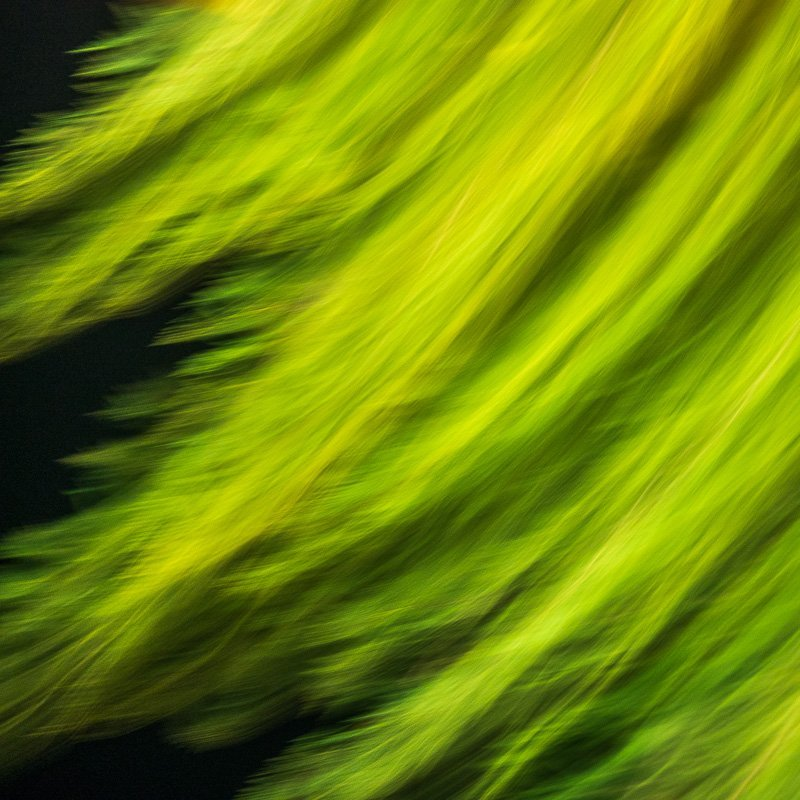 Green Abstract 1