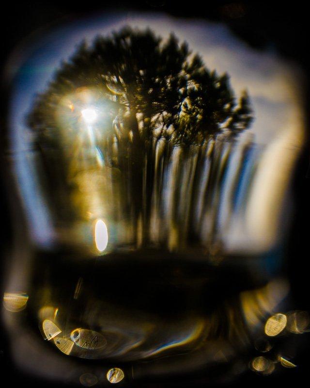 Light Through The Black Forest