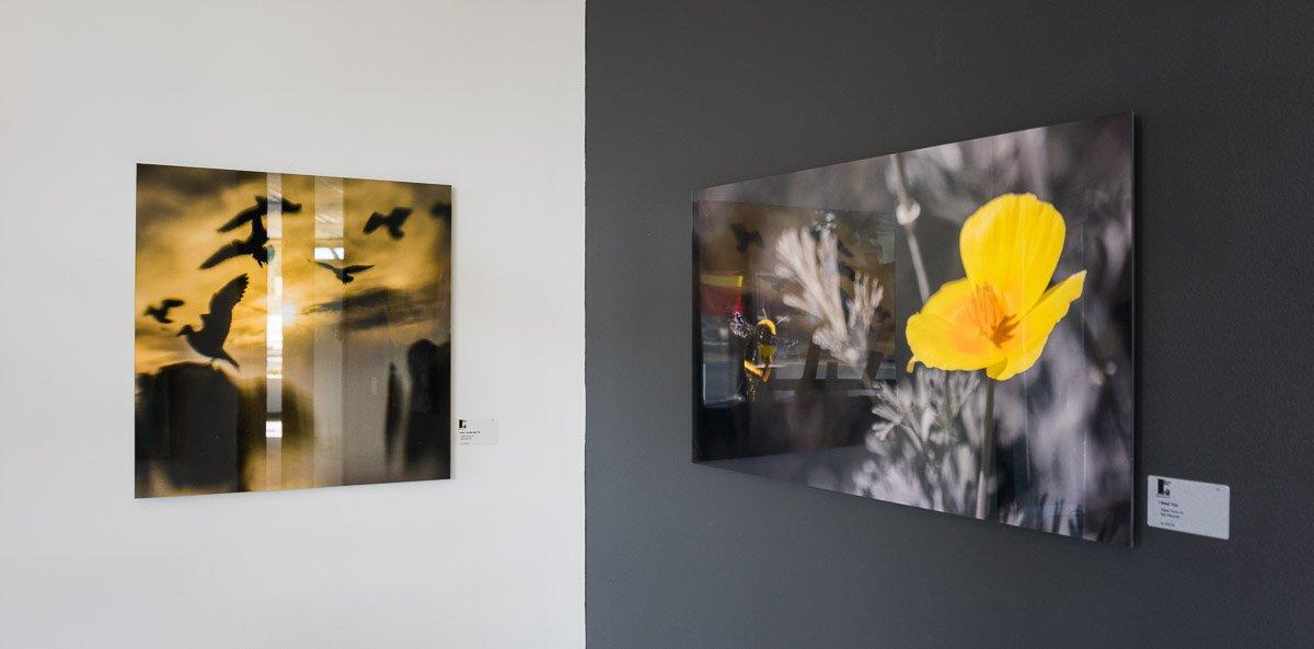 Exhibitions by Maz Mahjoobi - Acrylic Prints on Kodak Metallic Paper
