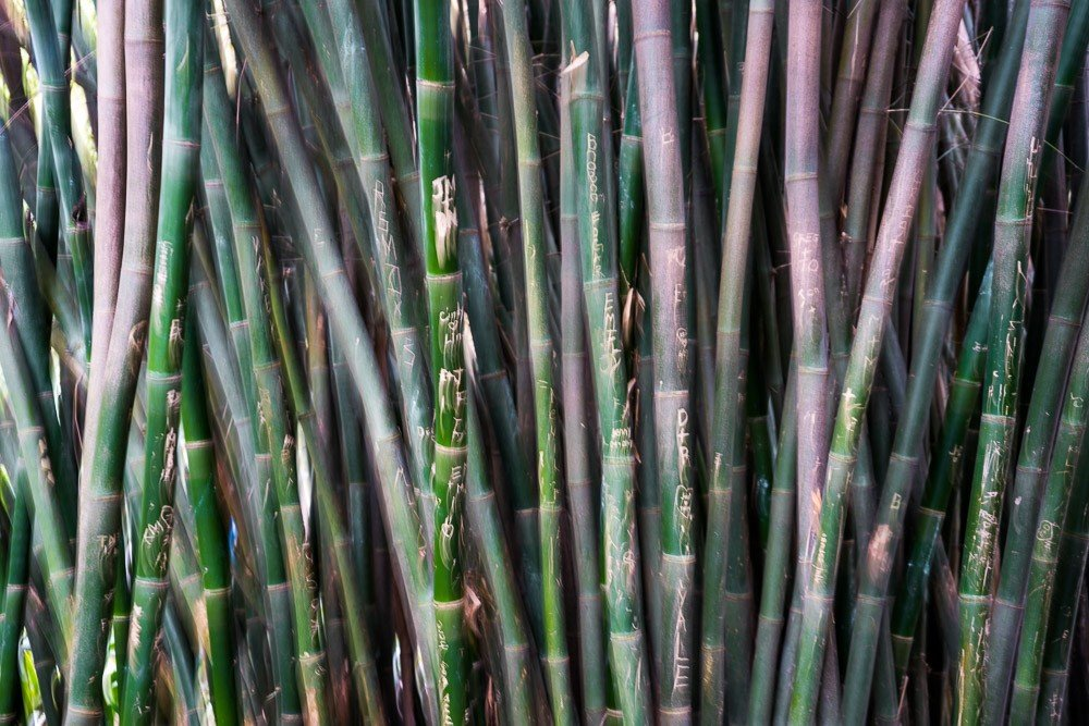 Bamboo Fever
