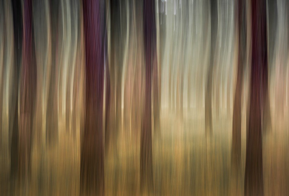 Forest Reverie 2
