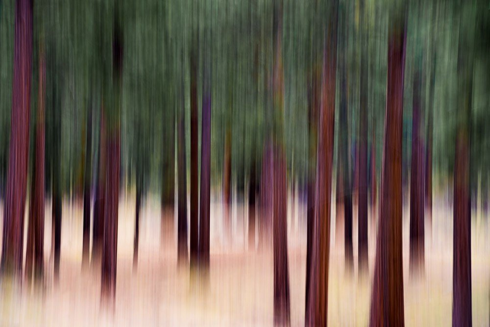 Forest Reverie 4