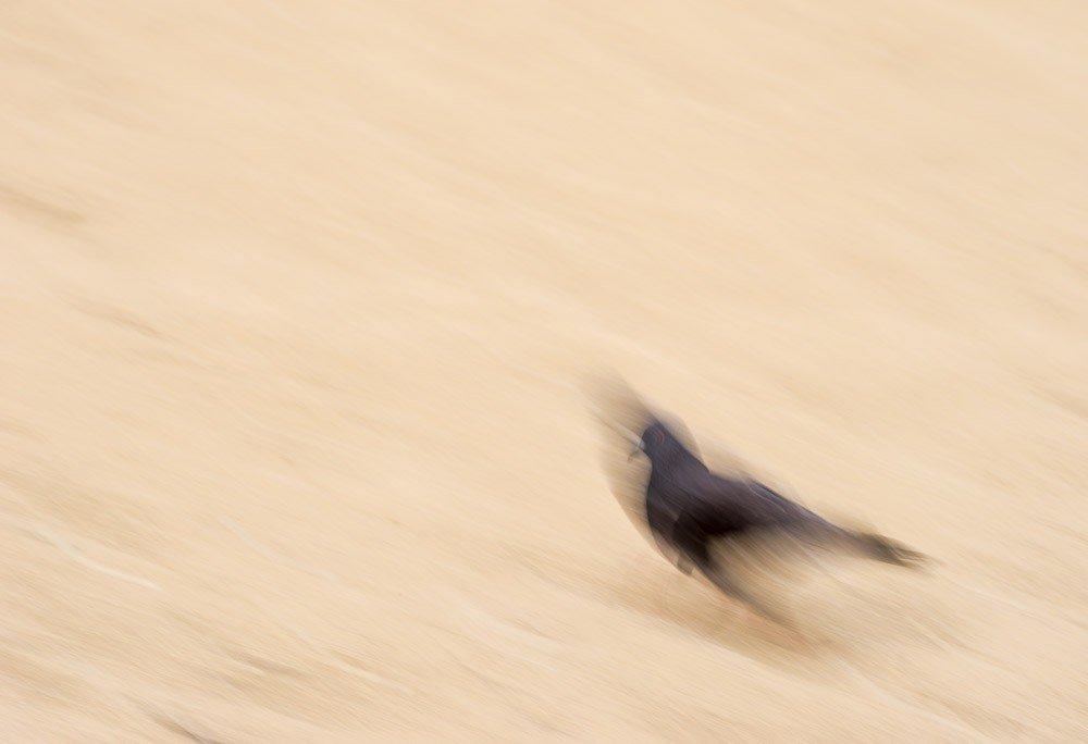 Pigeon Sands