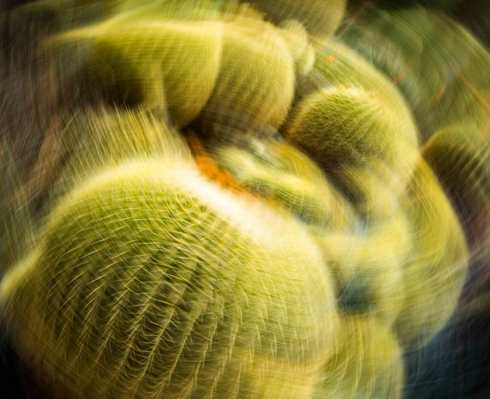 Cactus Abstract 1