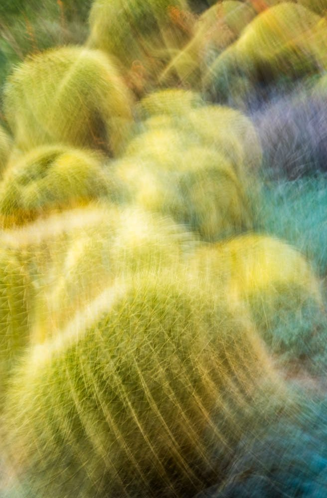 Cactus Abstract 2
