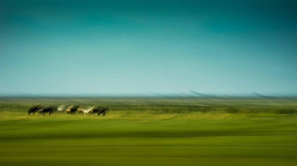 Distant Herd