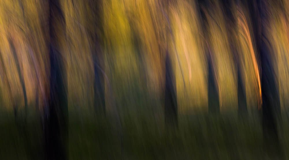 Forest Abstract 10