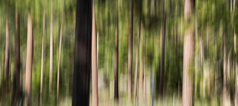 Forest Abstract 2