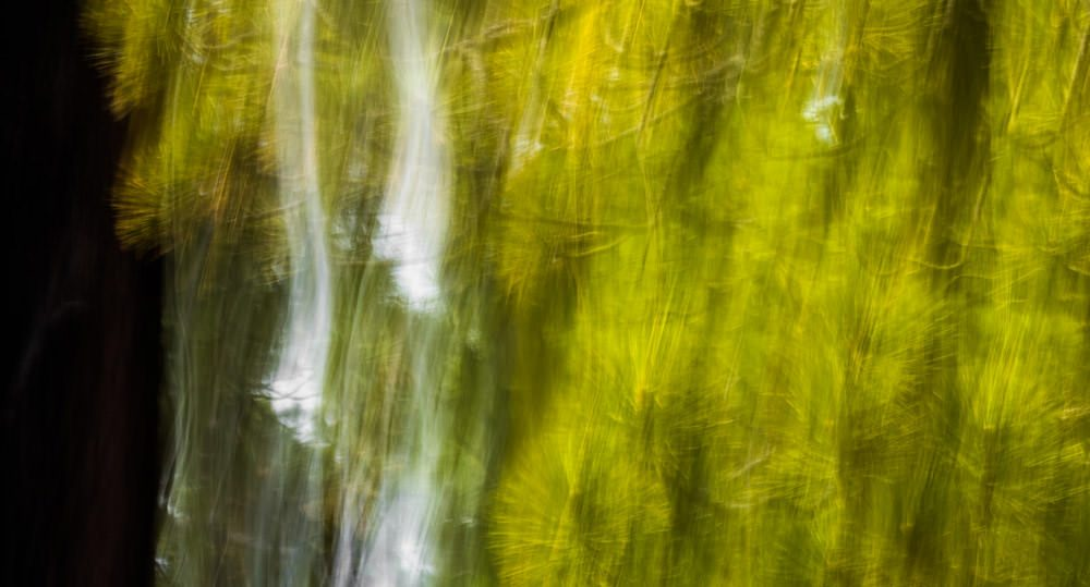 Forest Abstract 28