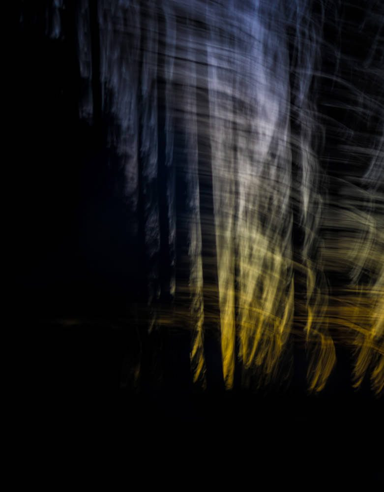Forest Abstract 31