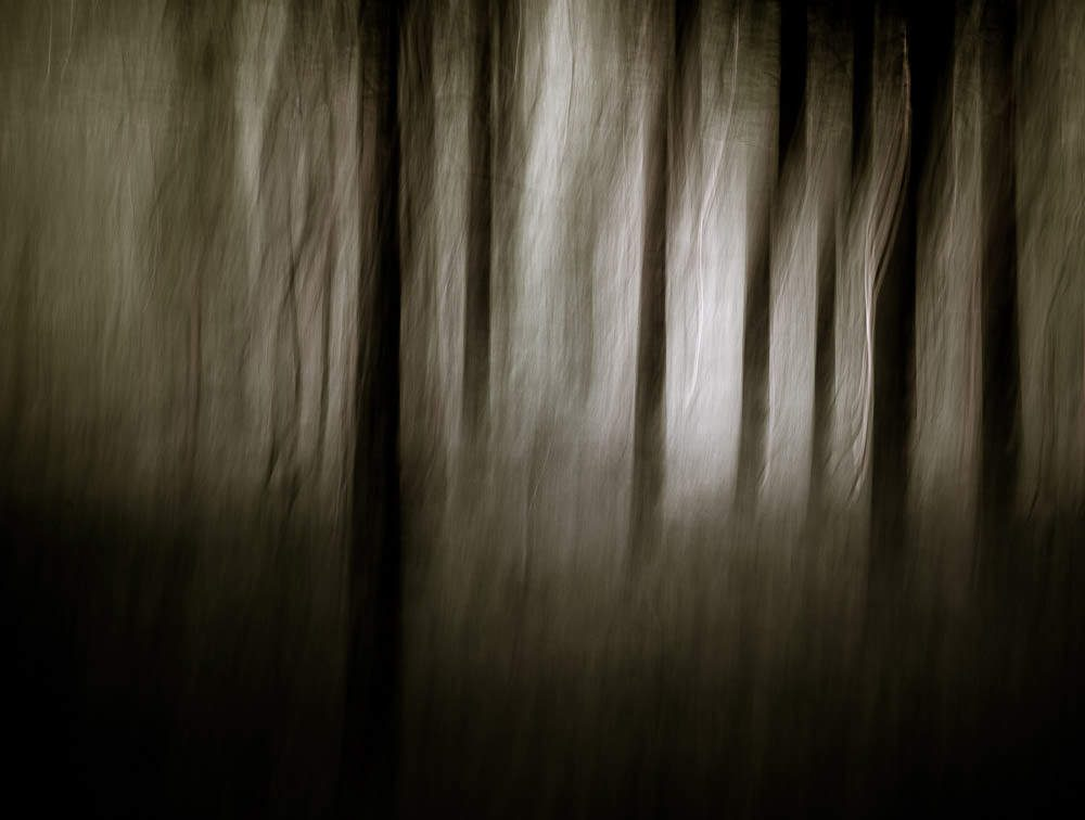 Forest Abstract 5