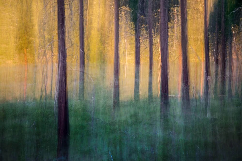Forest Abstract 9
