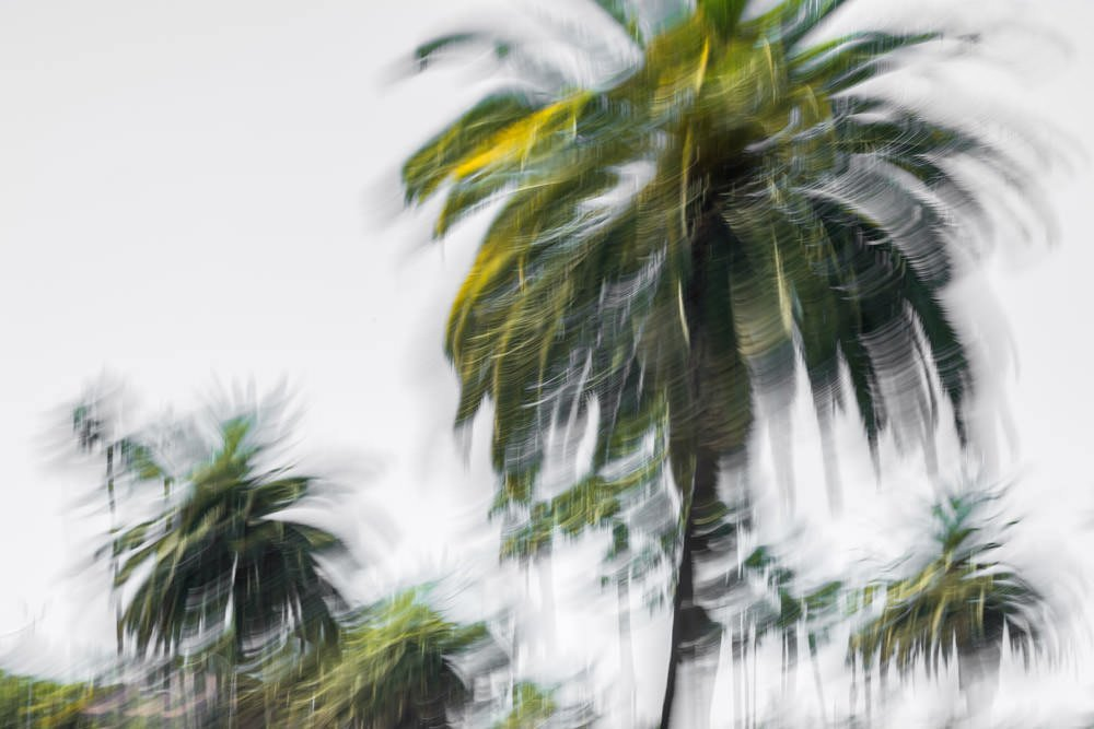 Palms On White