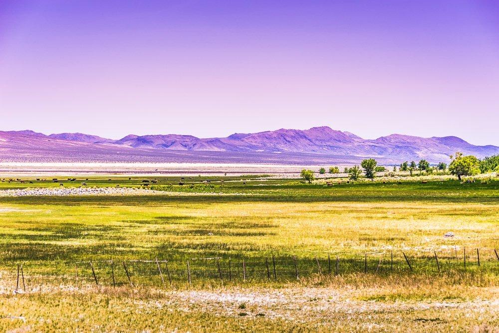 Landscape 50