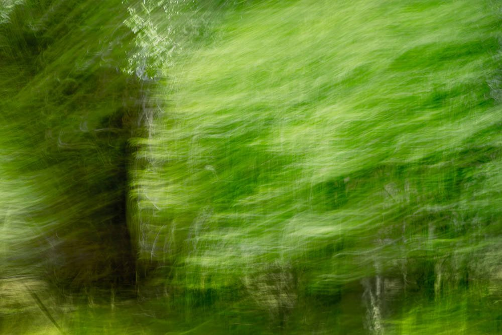 Nature Abstract 207