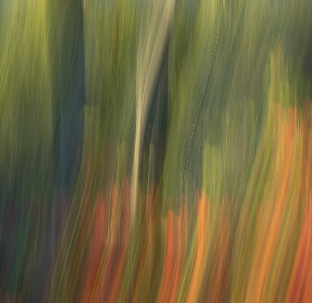 Nature Abstract 3
